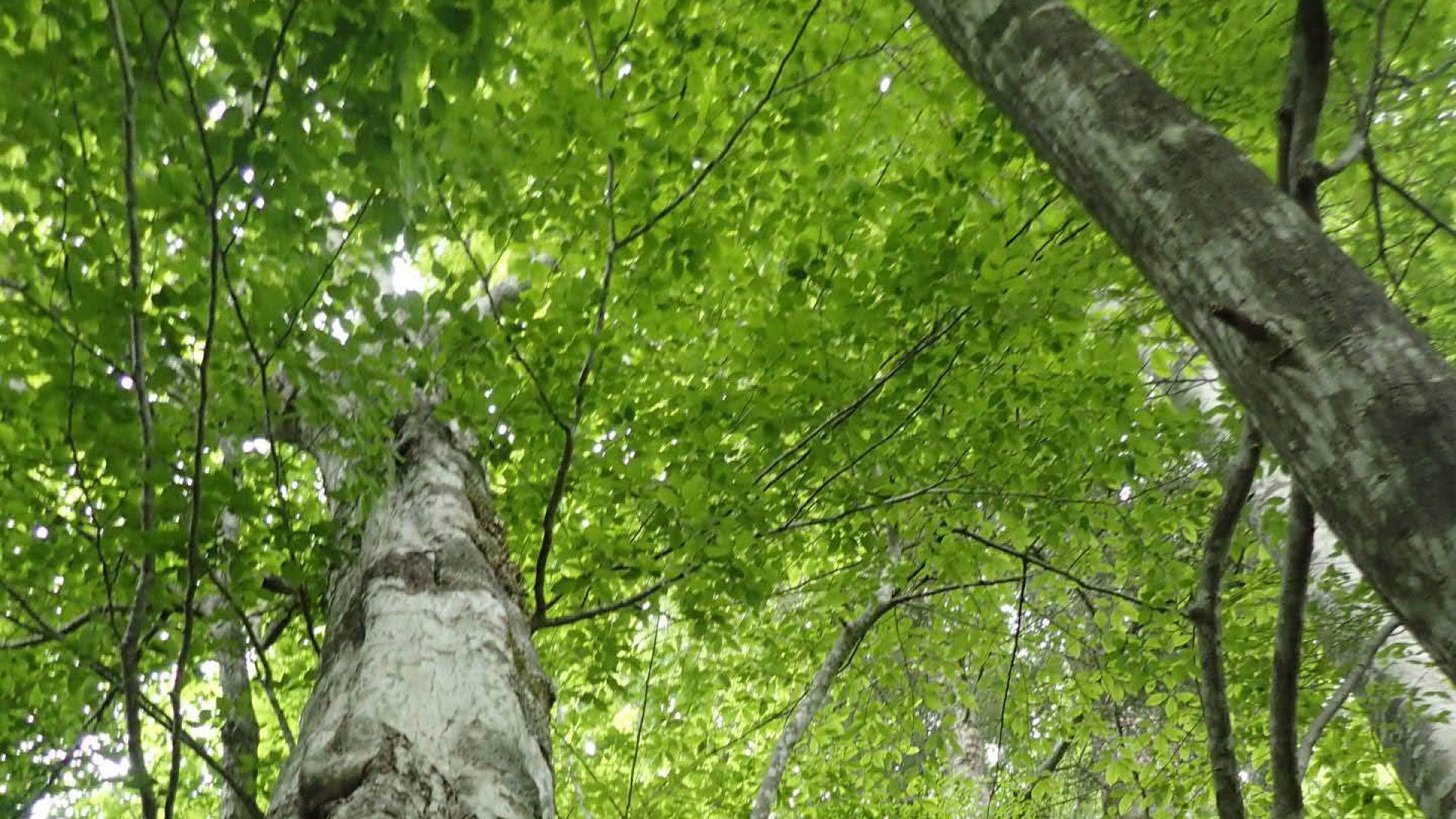 つくば林業